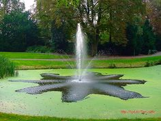 Walkartpark Zeist, The Netherlands - 2345