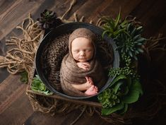 Baby Jack. ❤️  Succulents... Such a nice alternative to florals for a baby boy.  Mary Kriss Photography.   Photographer specializing in infant portraiture. Located in Surprise, AZ.   www.marykrissphotography.com Newborn Posing, Newborn Shoot, Baby Boy Newborn, Baby Boy Photography, Newborn Photography Props, Children Photography, Mummy Photos, Surprise Az, Baby Poses
