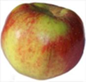 King of Tompkins County - Late season unrivaled dual eating and cooking apple Apple Varieties, Fruit And Veg, Farmer, Eye Candy, Mango, Apples, Trees, Gardening, Cooking