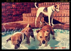 South African Artists, Underwater, Cow, Creatures, Horses, Puppies, Fine Art, Prints, Photography