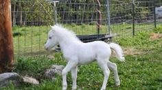 97 En Iyi At Görüntüsü Horse Pictures Cutest Animals Ve White