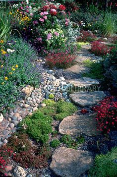 I'd like small paths of flat rocks in my gardens also. I was able to lay a few last year. I'm hoping for more this year.