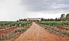 Viñedos y Bodega Manuel Manzaneque, visita una bodega en D.O. Finca Élez. Una selección Enoturis. #enoturismo #winetourism  #oenotourisme