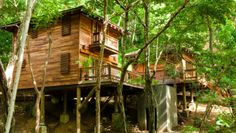 Aqua Wellness Resort: The Aqua is secluded in a rainforest, with treetop accommodations and a private beach.