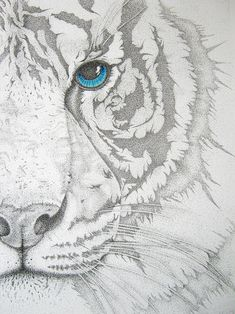 Stippled  Piercing | Mayhem Mediums--white tigers will always and forever remind me of the wild one.