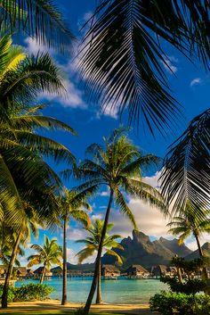 Dec 22 2019 - Four Seasons Resort Bora Bora Motu Tehotu Bora Bora Society Islands French Polynesia. Vacation Destinations, Dream Vacations, Vacation Spots, Holiday Destinations, Beautiful Places To Travel, Beautiful Beaches, Bora Bora French Polynesia, Society Islands, Tropical Beaches