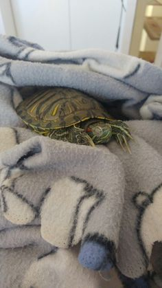 Red Eared Slider, Sliders, Moccasins, Animals, Tortoise, Turtle, Penny Loafers, Animales, Loafers