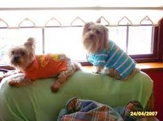 Homemade doggie clothes