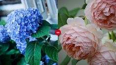 Which flower is prettier?