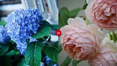 Which flower is prettier?