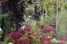 Ogród z lustrem - strona 342 - Forum ogrodnicze - Ogrodowisko