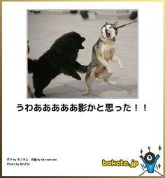 nwknews imgs e 8 Funny Animal Memes, Funny Animal Pictures, Funny Photos, Funny Animals, Funny Horses, Funny Dogs, Cute Baby Animals, Animals And Pets, Japanese Funny