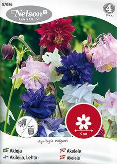 Akleja är en spröd, romantisk och gammaldags torpväxt. Denna sort ger stora dubbla blommor i blandade färger. Elegant i rabatten och underbar som snittblomma.