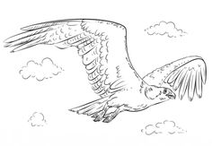 Common Redpoll coloring page from