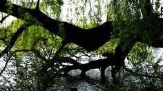 tree at lake bank