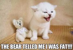 The bear telled me I was fat!