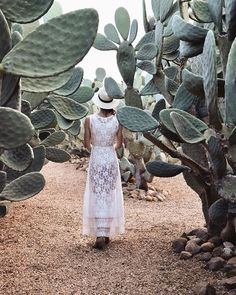 Prickly pear maze Planting Roses, Succulents Garden, Maze, Cacti, House Plants, Cool Designs, Gardening, Pear, Instagram