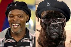 10 Pets That Look Just Like Their Owners