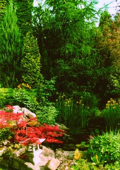 Kerti tavak, patakok, szökőkutak, vízesések, csobogók - Abies Trend Kft. .. - Picasa Webalbumok Gardens, Plants, Picasa, Plant, Tuin, House Gardens, Planting, Planets, Garden