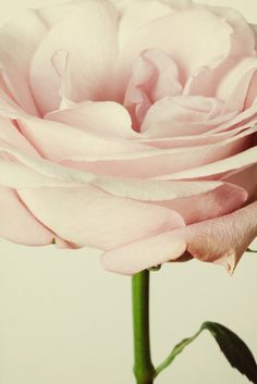 la-la-la-bonne-vie:  Tomorrow is the first day of Spring!