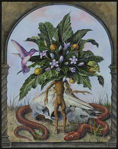 B.A.Vierling Painting: Mandragora officinarum