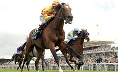 Your Specialist Help Guide To Racing At Doncaster Racecourse In The Uk #races #doncaster #racing #race #st_leger #tips #racecourse