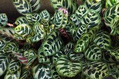 15x Eucalyptus Huis : Beste afbeeldingen van planten voor in huis