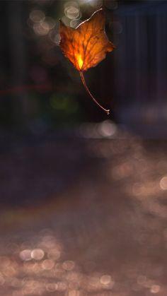 #fall #charlieagogo