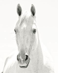 White Horse Photograph, Light Shadows Horse Photograph, White on White Art, Monochromatic Black and White Animal photograph via Etsy