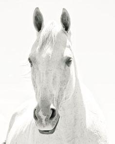 White Horse Photograph, Light Shadows Horse Photograph, White on White Art, Monochromatic Black and White Animal photograph via Etsy