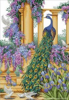 Peacock Elegance 1/10