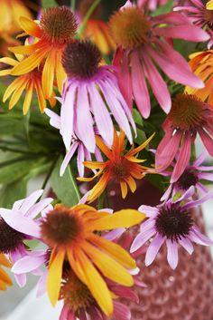 Love Nature: Echinacea