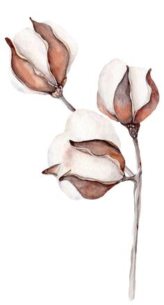 Wallpaper art illustration flower ideas for 2019 Illustration Botanique, Illustration Blume, Botanical Illustration, Watercolor Illustration, Watercolor Plants, Watercolor Drawing, Floral Watercolor, Watercolor Paintings, Botanical Drawings