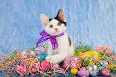 Día festivos Pascua Gato Huevo Lazo Animalia