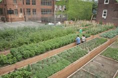 """""""Welcome to Tenth Acre Farms! We are Brooklyn's newest addition to the NYC urban farming community. Started in Early 2009 by Jordan Hall, Bennett Wilson, and Adam Wilson, in Mr. Hall's backyard, we have now expanded to the abandoned basketball court at St. Cecilia's School at 215 Richardson St. in Greenpoint, Brooklyn."""""""