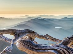 Oregon Picture -- Whitebark Pine Photo -- National Geographic Photo of the Day