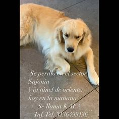 #perroperdido Instagram, Dogs, Animals, Animales, Animaux, Animal Memes, Animal, Pet Dogs, Dog