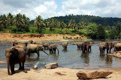 Pinnawala, Sri Lanka