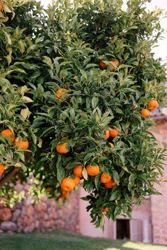 Babymoon in Mallorca, Part 2 - Gal Meets Glam Small Restaurants, Organic Farming, Organic Gardening, Gardening Tips, Gal Meets Glam, Let's Make Art, At The Hotel, World Heritage Sites, Botanical Gardens