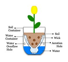 Sub-irrigated planter: A simple SIP has three major parts: a container for soil; a container for water; and a wick that allows water to be drawn from the water container into the soil container. Hydroponics Setup, Seed Planter, Self Watering Plants, Diy Bottle, Bottle Crafts, Water Bottle, Water Containers, Pop Bottles, Plastic Bottles