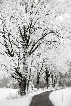 It snowed today! 1/25/2013