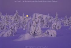 Blue moment in Finland winter:  Lappi Satumaa -  Lapland Wonderland