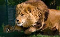 Resultado de imagen para pintura de leones saliendo de  la pared