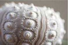 lpandeff / cocoroachchanel / Sputnik Sea Urchin