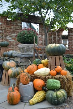 Fall porch decorating - here's some inspiration (and some pumpkins) from Chartreuse & co