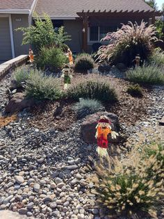 Frontyard plants happily growing. Starting to decorate for the fall and Halloween 2014