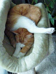 Simon sleeping (by Kathy Muelker)