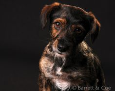 "April 2015 Portrait of Excellence: ""Pets"" - 1st Place. Photographed by Barrett & Coe Caversham."