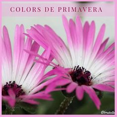 #sensefiltre #plantes #Catalunya #paíspetit #naturalesa #flora #Maigl2016 #primavera #fotografia #colors  #terrassadecasa #flowers #plants #Catalonia #nature #spring #Mayl #instagood #macro #canon #photograph  #colors #house