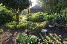 vegetable.garden.beauty2.jpg shade